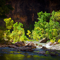 Contrasting Light of the Virgin River and Early Fall Trees