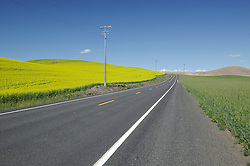 A road separates a wheat field from a canola field in the Palouse area, Washington.