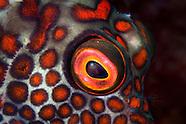 Eyes on New Zealand Fish