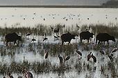 2011-03: Nakuru National Park