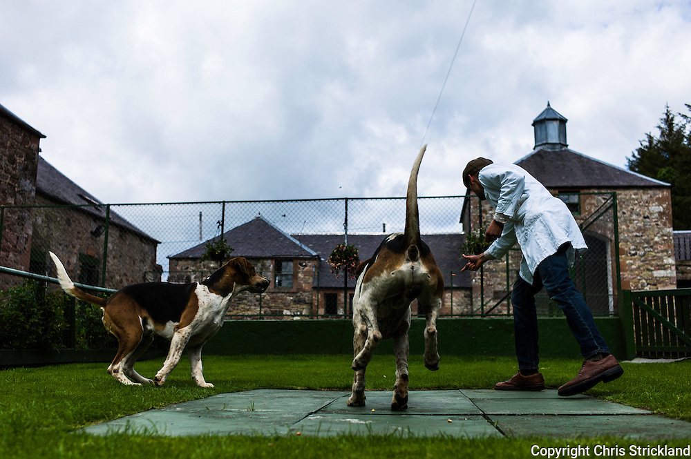 Abbotrule, Bonchester Bridge, Hawick, Scotland, UK. 19th July 2015. Huntsman Johnny Richardson works with doghounds Domino (l) and Cracker in the show ring.