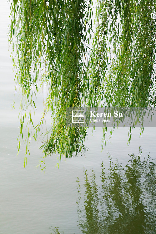 Willow tree branches with reflection in the water, West Lake, Hangzhou, Zhejiang, China