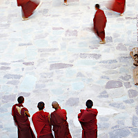 Four young Monks watching the other four dance after the end of the first day of Hemis Festival at Hemis Monastery in Leh District.