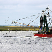 Shrimp Boat heading out to sea with sea birds following in it's wake.