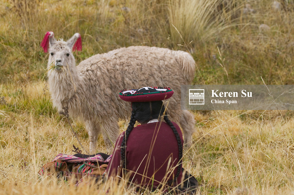 Indian woman llama on the meadow, Cuzco, Peru
