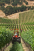 Del Rio Vineyards worker on tractor trimming wine grape vines; Rogue Valley, Gold Hill, Oregon.