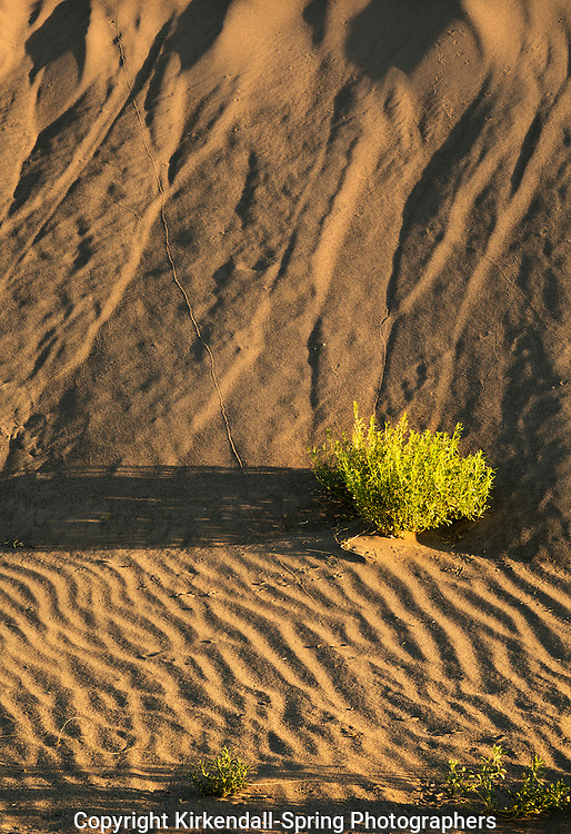 ID00661-00...IDAHO - Lines and texture in the early morning light at Bruneau Dunes State Park.