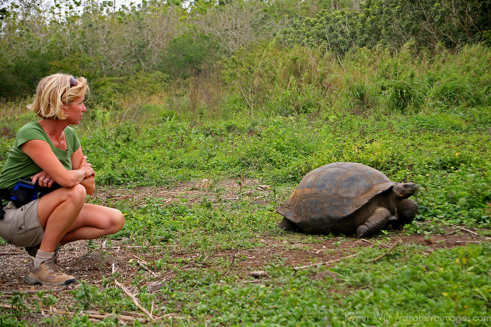 America, South America, Ecuador, Galapagos Islands, Santa Cruz Island. Encounter with the Galapagos Tortoise in the highlands of Santa Cruz Island.