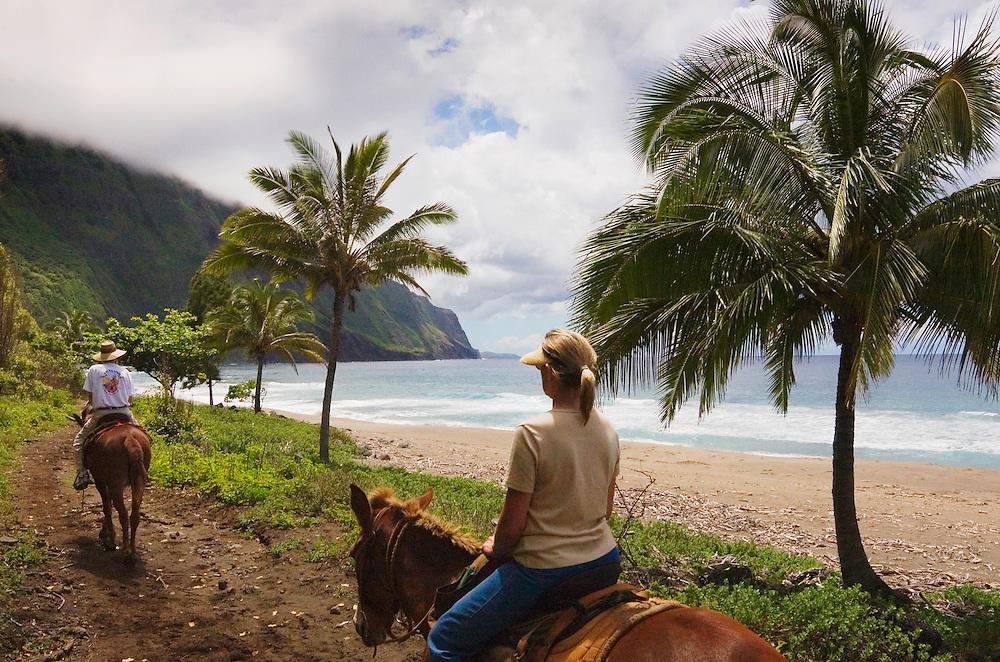 Couple riding along beach on Molokai Mule Ride tour at Kalaupapa National Historic Park; Molokai, Hawaii.