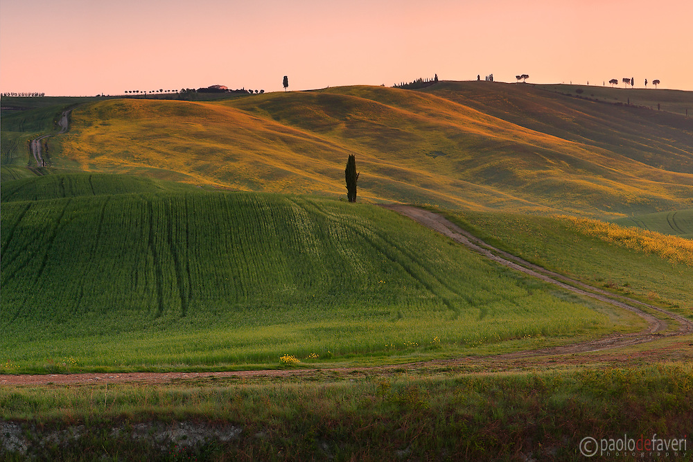 Rolling hills, crop fields and scattered trees, the typical Tuscan country side. Taken at in the fields between San Quirico d'Orcia and Montalcino.