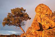 Scenery<br /> Sierra de And&uacute;jar Natural Park, Mediterranean woodland of Sierra Morena, north east Ja&eacute;n Province, Andalusia. SPAIN<br /> <br /> Mission: Iberian Lynx, May 2009<br /> &copy; Pete Oxford / Wild Wonders of Europe<br /> Zaldumbide #506 y Toledo<br /> La Floresta, Quito. ECUADOR<br /> South America<br /> Tel: 593-2-2226958<br /> e-mail: pete@peteoxford.com<br /> www.peteoxford.com