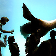 A sea lion glides by amazed attendees at his exhibit within the Oregon Zoo. Many will press up to the glass in order to be a close to the animal as possible.