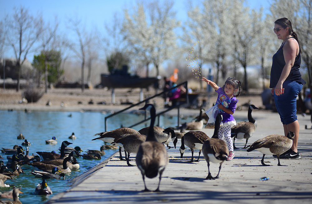 apl031317a/ASECTION/pierre-louis/JOURNAL 031317<br /> 3 year-old Trinity Faith,, and her mother Elizabeth Bustos,, feed the ducks and Canadian geese at Tingley Beach. &quot;It's Mid-March , feels like summer &quot; said Bustos as the pair took advantage of the warm  temperatures . Photographed  on Monday March 13, 2017. .Adolphe Pierre-Louis/JOURNAL
