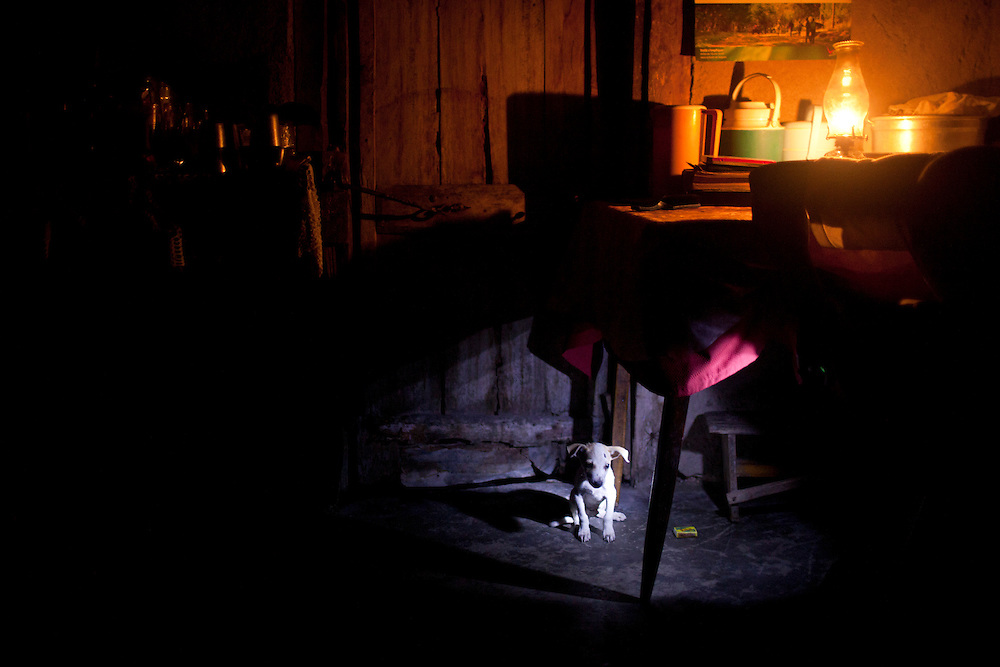 A puppy sits under a table on July 15, 2010 in Gador, Haiti.