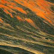 Colorado, Red Cone, Webster Pass