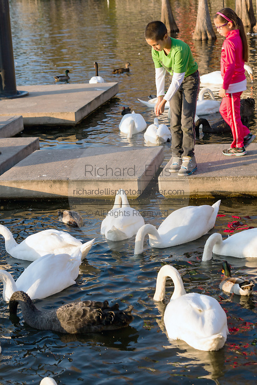 Children feed swans at Lake Eola Park in Orlando, Florida. Lake Eola Park is located in the heart of Downtown Orlando and home to the Walt Disney Amphitheater.