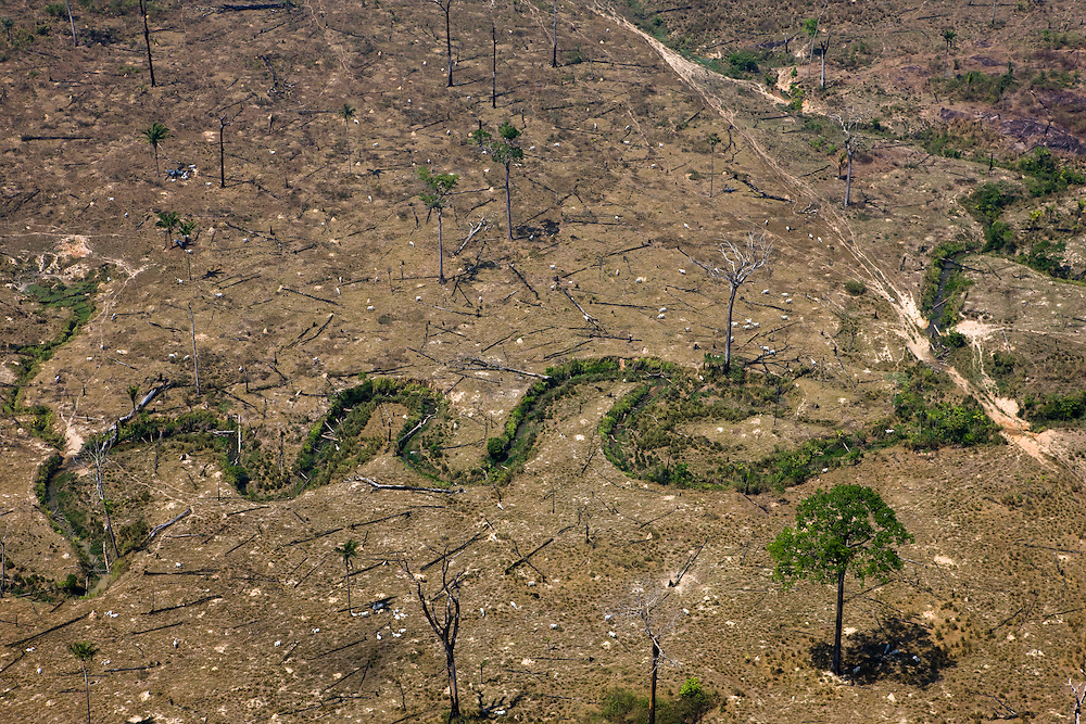 Cattle graze near a stream on a ranch owned by Joao Pereira Da Silva in Sao Felix Do Xingu, Para State, Brazil, August 12, 2008. Daniel Beltra/Greenpeace