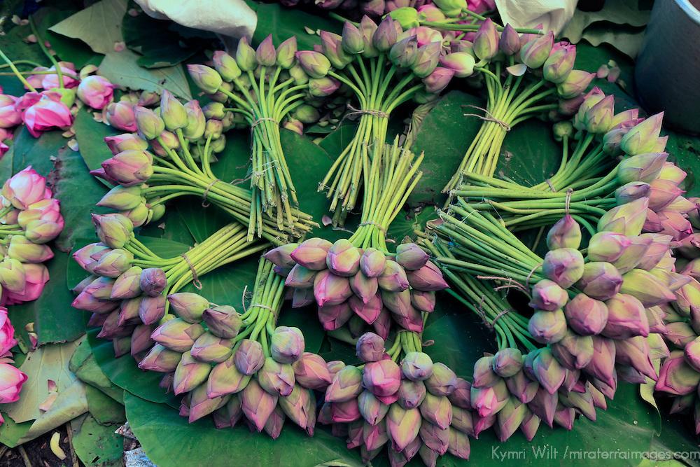Asia, India, Calcutta. Fresh cut bunches of Lotus the flower market in Calcutta.