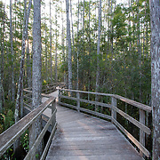 Corkscrew Swamp Sanctuary, National Audubon Society, Naples, Florida.