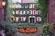 Pumpkins on back yard in Halloween season.