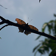 Butterfly on Limb in Summertime