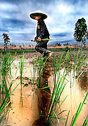 A young girl planting rice in Thakhek, Laos.