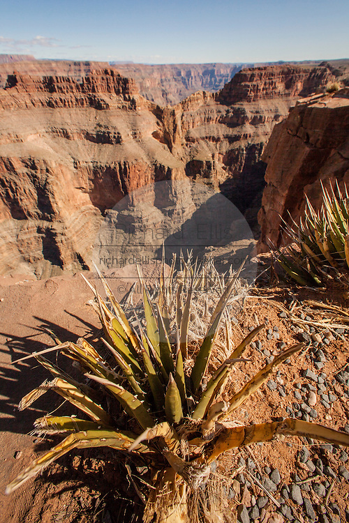 View of the Grand Canyon West at Eagle Point from the Hualapai Nation reservation, AZ.