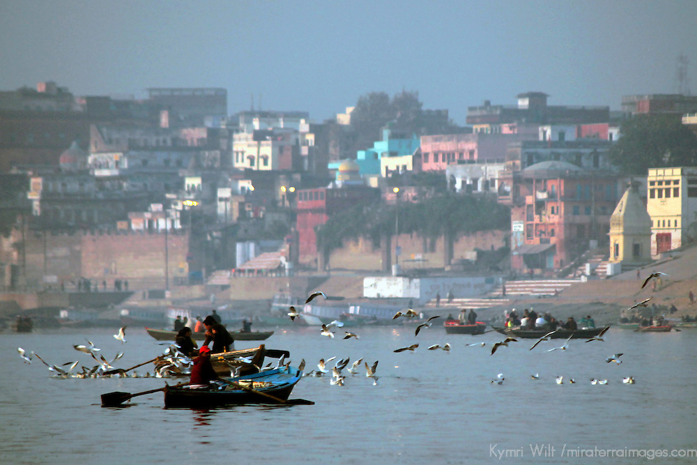 Asia, India, Varanasi. Sea birds and gulls flock boats on the river Ganges.