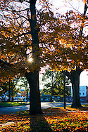 Fall, Elmwood, IL.