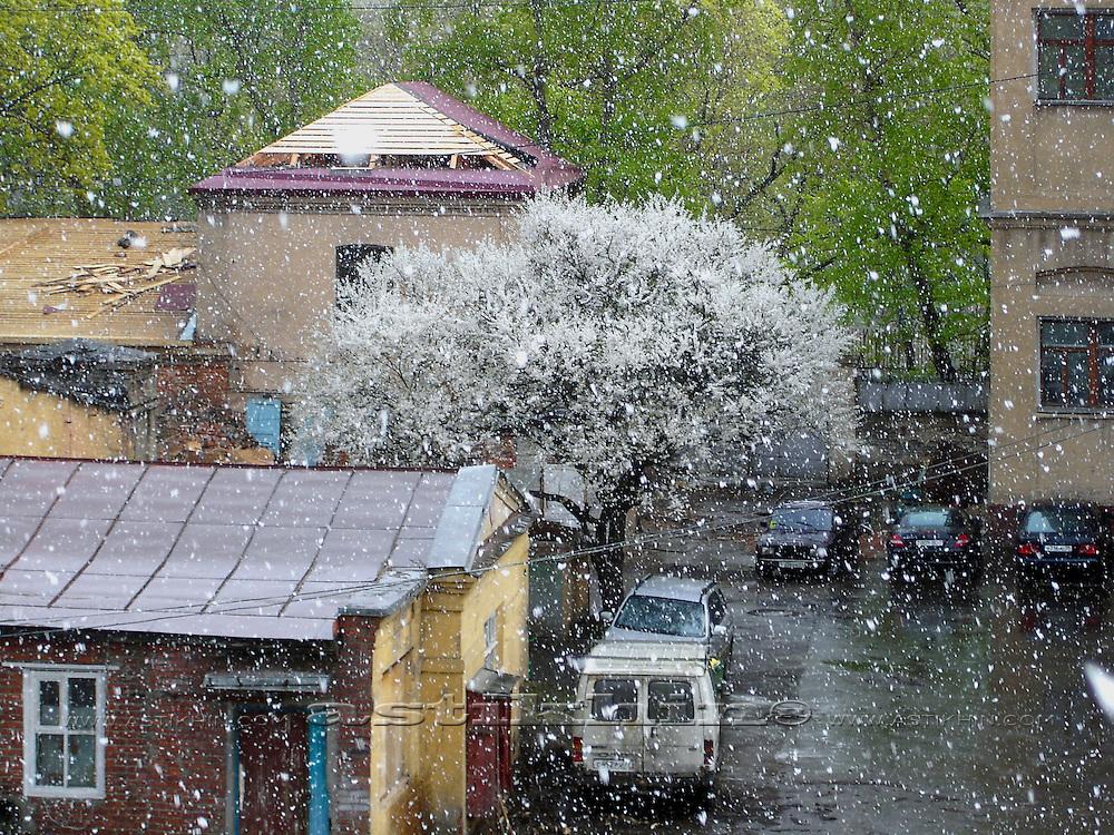 Photo by Valery Kuharev (last snow)