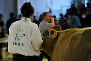 5/10/12 - COURNON - PUY DE DOME - FRANCE - Sommet de l Elevage 2012. Ventes aux encheres de Brune - Photo Jerome CHABANNE
