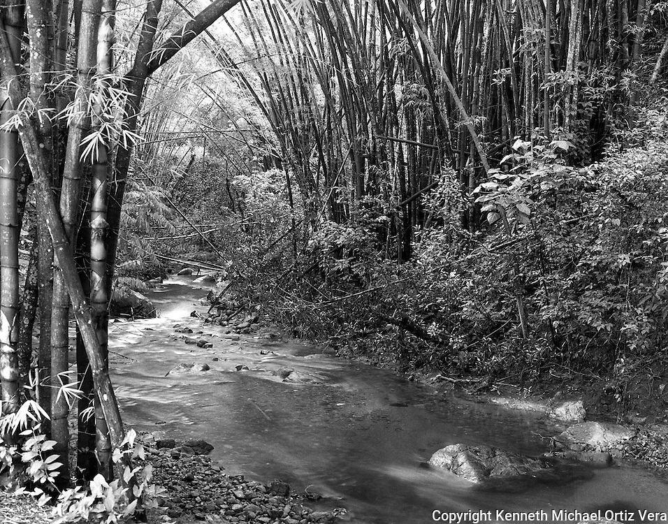 """This photo was taken in the National Rain forest of Puerto Rico called """"El Yunque""""."""