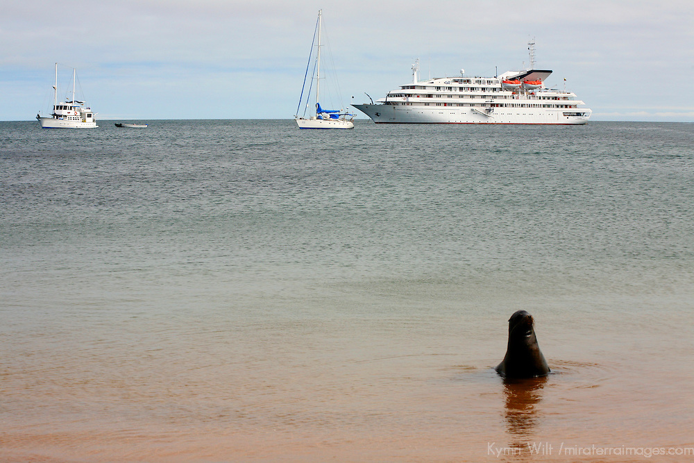 The MV Galapagos Explorer II and a Galapagos Sea Lion at Bartholomew Island. Ecuador, South America