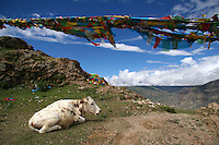 A prayer flag is a colorful panel or rectangular cloth often found strung along mountain ridges and peaks high in the Himalayas to bless the surrounding countryside or for other purposes. Unknown in other branches of Buddhism, prayer flags are believed to have originated with Bon, which predated Buddhism in Tibet. Traditionally they are woodblock printed with texts and images.