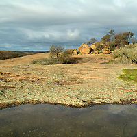 This small ephemeral pool, which was located on top of Wave Rock in Hyden, Western Australia contained frog (or toad) spawn and was surrounded by sundew. It was made during the winter when rain is more common.