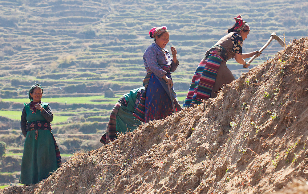 Tamang women wearing traditional clothes and working on a farm, Nepal