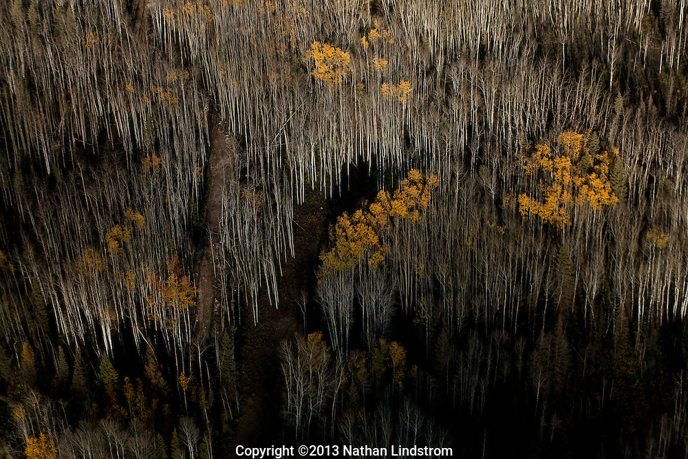Dark dense forest in Canada. <br />