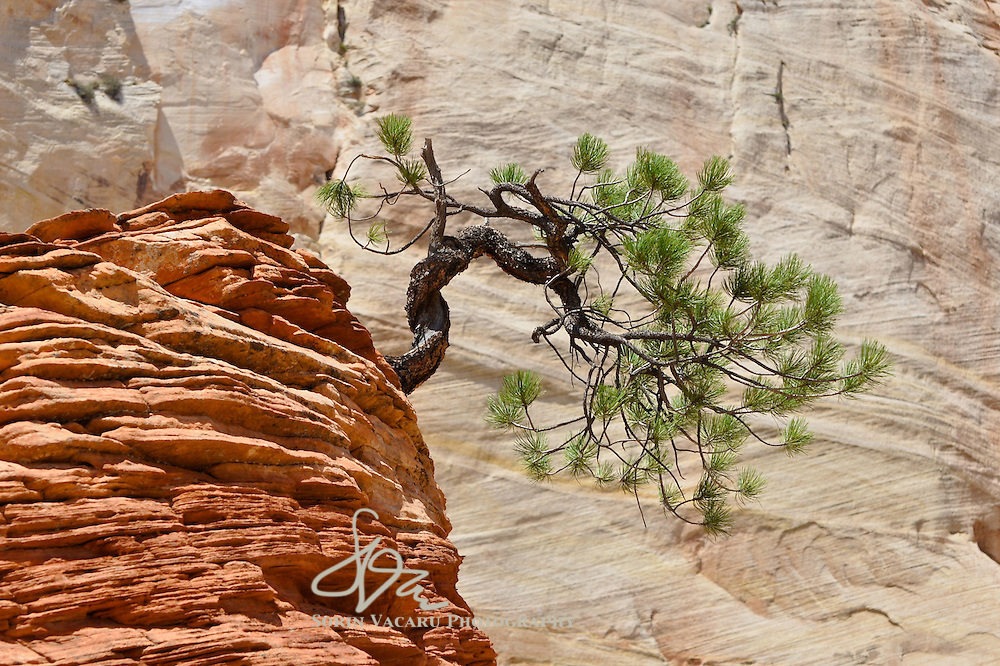 Trip to the American Southwest