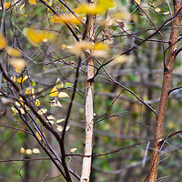 Botanicals: Woodlands