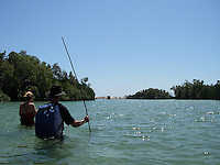 Hunting fish and crabs in the mangroves
