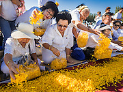 "02 JANUARY 2016 - KHLONG LUANG, PATHUM THANI, THAILAND: Women place marigolds of along the path monks will walk at Wat Phra Dhammakaya on the first day of the 5th annual Dhammachai Dhutanaga (a dhutanga is a ""wandering"" and translated as pilgrimage). More than 1,300 monks are participating pilgrimage through central Thailand. The purpose of the pilgrimage is to pay homage to the Buddha, preserve Buddhist culture, welcome the new year, and ""develop virtuous Buddhist youth leaders."" Wat Phra Dhammakaya is the largest Buddhist temple in Thailand and the center of the Dhammakaya movement, a Buddhist sect founded in the 1970s. The monks are using busses on some parts of the pilgrimage this year after complaints about traffic jams caused by the monks walking along main highways.          PHOTO BY JACK KURTZ"