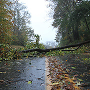 10/29/12 - Wilmington, DE - Hurricane Sandy -  A down tree and debris blocks Millcreek Rd, Near Crossgate Park Monday, Oct. 29, 2012, in Wilmington DE.  ..SAQUAN STIMPSON/Special to The News Journal.