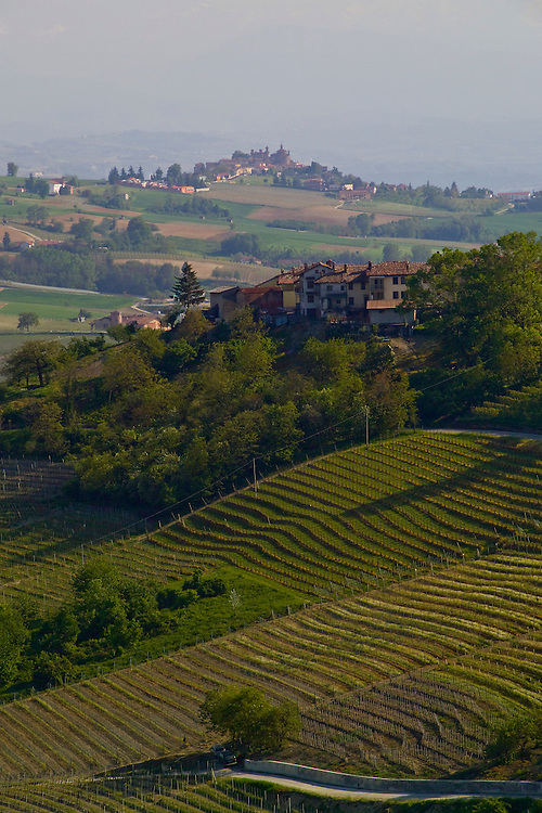 "Rolling green hillside landscape of Barolo wine country, next to Alba in Pinerolo area. Produces the ""king of wines"" Barolo wine from Nebbiolo grapes. Hilltop and valley homes, red tile roofs on split level stucco homes, manicured farmland, tiered vineyards,one lane road in front of vinyard, trees provide windbreak. Alps in the background. Bella Baita"