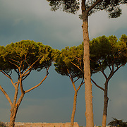 The Colosseum under the trees of Palatine Hill, Rome, Italy