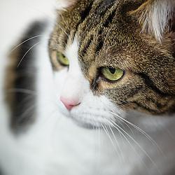 Abinormal - Cat