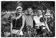 vineyard workers, daughters, Bandol, France
