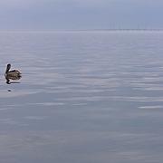 Pelican, Lake Pontchartrain, and I-10 Bridge