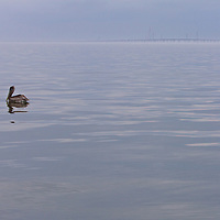 Pelican, Lake Pontchartrain, and I-10 Bridge
