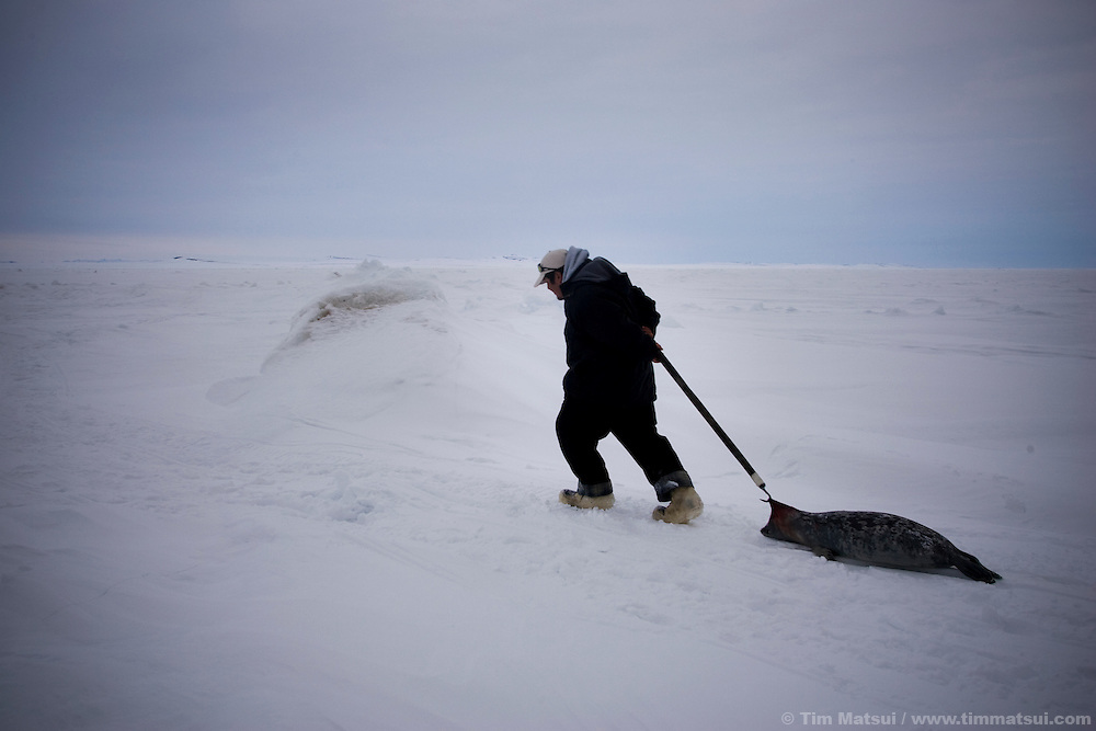 Kivalina, Alaska. Climate change is melting sea ice early and forming it late, leaving this 400 person Inupiat Eskimo village susceptible to coastal erosion by winter storms. Also at stake is the cultural heritage of this native population which survives on subsistence hunting developed over generations.