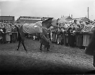 08/03/1958<br /> 03/08/1958<br /> 08 March 1958<br /> Grand National entries at the Leopardstown Races. &quot;Mr. What&quot; owned by Mr. D.J. Coughlan.